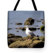 Herring Gull At Charmouth Tote Bag
