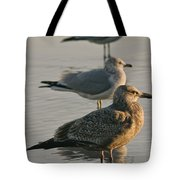 Herring Gull  Tote Bag