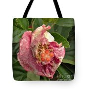 Hibiscus Bloom Closed In The Rain   End View      May           Indiana      Tote Bag