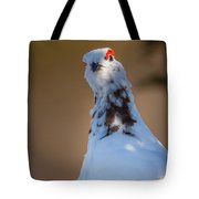 Hiding In The Shadows Tote Bag