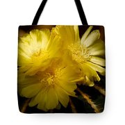 High Angle View Of Cactus Flowers Tote Bag