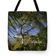 highlands in Costa Rica 2 Tote Bag