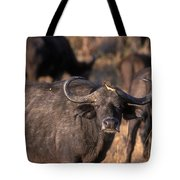 Hitching A Ride 1 Tote Bag