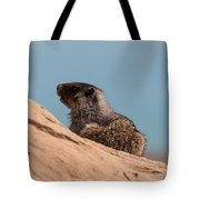 Hoary Marmot On Blue Tote Bag