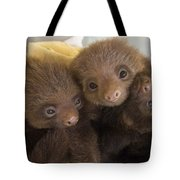 Hoffmanns Two-toed Sloth Choloepus Tote Bag