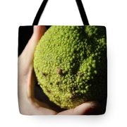 Holding A Tree Seed Tote Bag