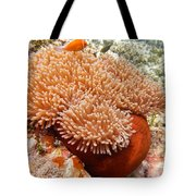 Home Of The Clown Fish 2 Tote Bag