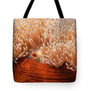 Home Of The Clown Fish 3 Tote Bag