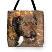 Homeless Dog Charlick Tote Bag