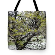 Honey Locust Tree On A Spring Snow Day Tote Bag