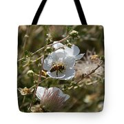 Honeybee Gathering From A White Flower Tote Bag