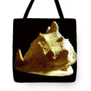 Horned Helmet Seashell Cassis Cornuta Tote Bag