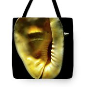 Horned Helmet Shell Cassis Cornuta Tote Bag