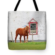 Horse At Panmure Island Lighthouse 5756 Tote Bag