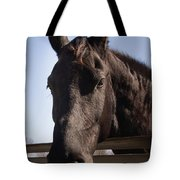 Horse By A Fence. Tote Bag