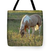 Horse Feeding In Grass Farm With Sunset Light From The Left Tote Bag