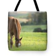 Horse In Field Near Ballyvaloo, Blackwater, Wexford Tote Bag