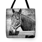 Horse Portrait In Black And White Tote Bag