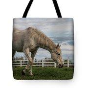 Horses #1 Tote Bag
