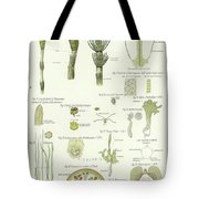 Horse Tail And Pillwort Tote Bag
