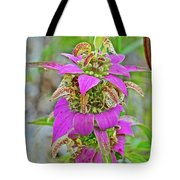 Horsemint On Trail To North Beach Park In Ottawa County, Michigan Tote Bag