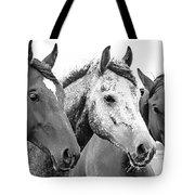 Horses - Id 16217-202749-4749 Tote Bag