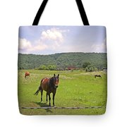 Horses In The Pasture Tote Bag
