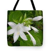 Hosta Bloom Tote Bag