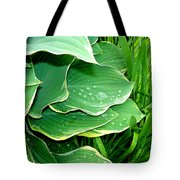 Hosta Leaves And Waterdrops Tote Bag