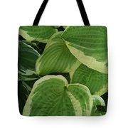 Hostas Galore Too Tote Bag