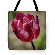 Hot Pink Tulip Squared Tote Bag
