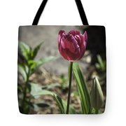 Hot Pink Tulip Tote Bag