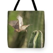 House Finch 0573 Tote Bag