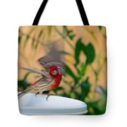 House Finch - 2 Tote Bag