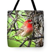 House Finch - 3 Tote Bag