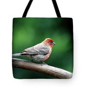 House Finch . 40d7227 Tote Bag