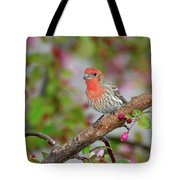 House Finch  Tote Bag