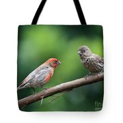 House Finch Courtship Tote Bag