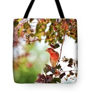 House Finch Hanging Around Tote Bag