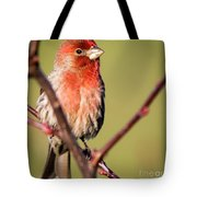 House Finch In Full Color Tote Bag