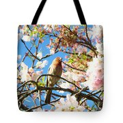 House Finch In The Cherry Blossoms Tote Bag