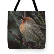 House Finch On A Rainy Day Tote Bag