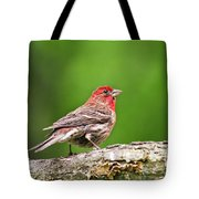 House Finch Perched Tote Bag