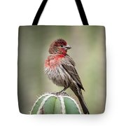 House Finch Perched On Cactus  Tote Bag