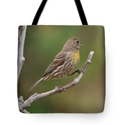 House Finch With Yellow Breast 1  Tote Bag