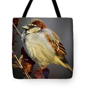 House Sparrow 1 Tote Bag