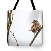 House Sparrow Tote Bag