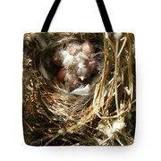 House Wren Family Tote Bag