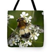 Hoverfly Leucozona Lucorum Tote Bag