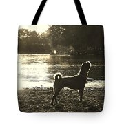 Howl At The Sun Tote Bag